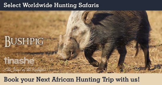 Hunting Bushpig in Southern Africa