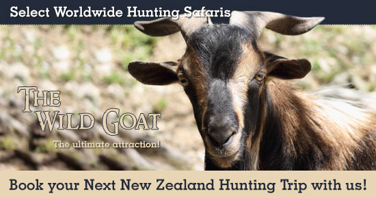 Hunting Wild Goat in New Zealand
