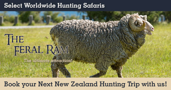 Hunting Feral Ram in New Zealand