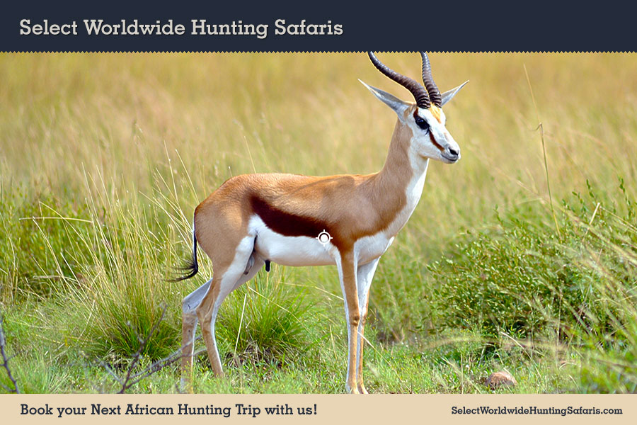 Hunting Springbok in Southern Africa
