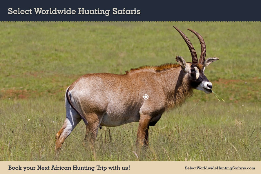 Roan Shot Placement Hunting in South Africa