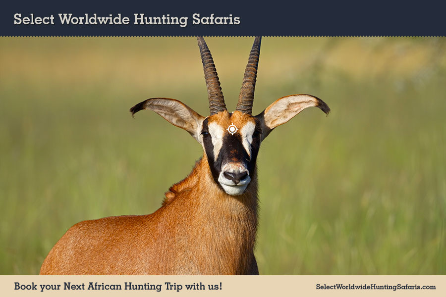Hunting Roan in Southern Africa