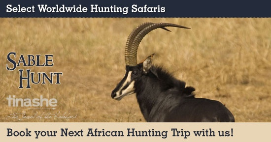 Sable Hunting in South Africa
