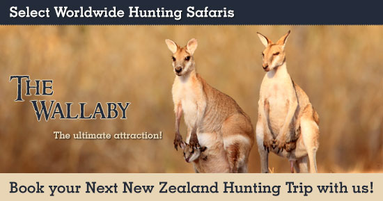 Hunting Wallaby in New Zealand