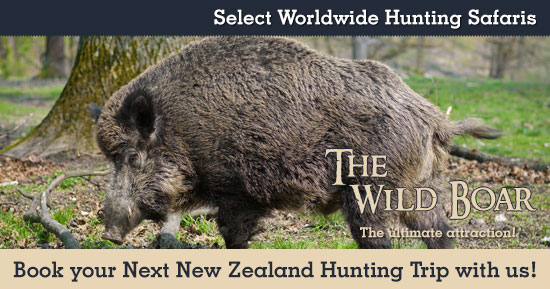Hunting Wild Boars in New Zealand