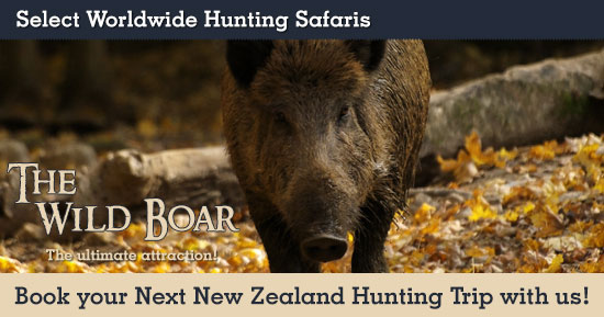 Hunting Wild Boar in New Zealand