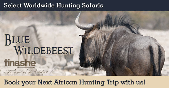 Hunting Blue Wildebeest in Southern Africa