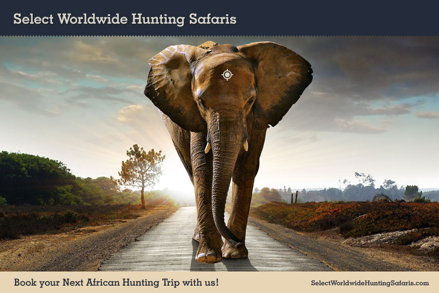 Hunting Elephant in Southern Africa