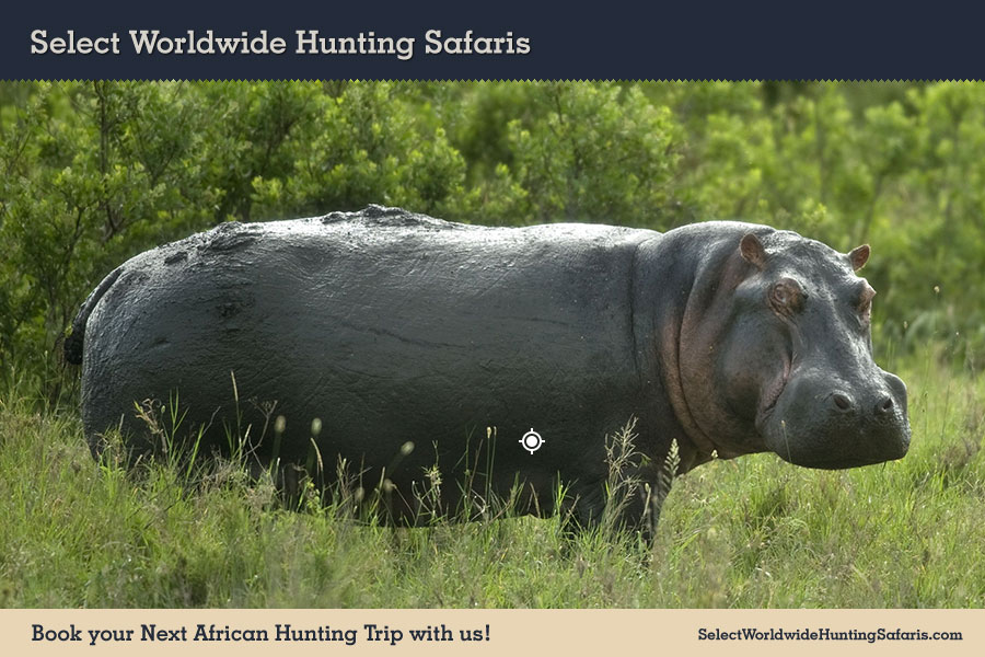 Hunting Hippopotamus in Southern Africa
