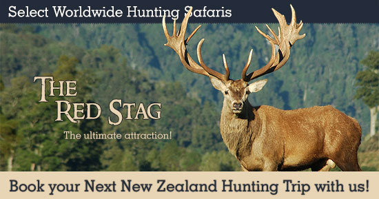 Hunting Red Stag in New Zealand