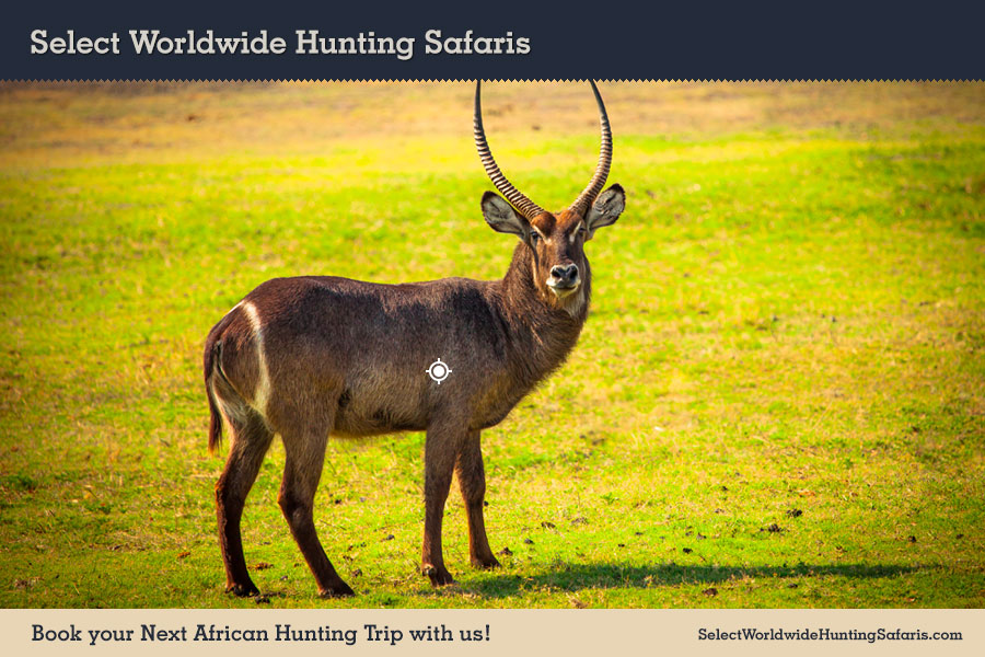 Hunting Waterbuck in Southern Africa